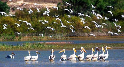 Doğal Hayat ve Kuş Cenneti